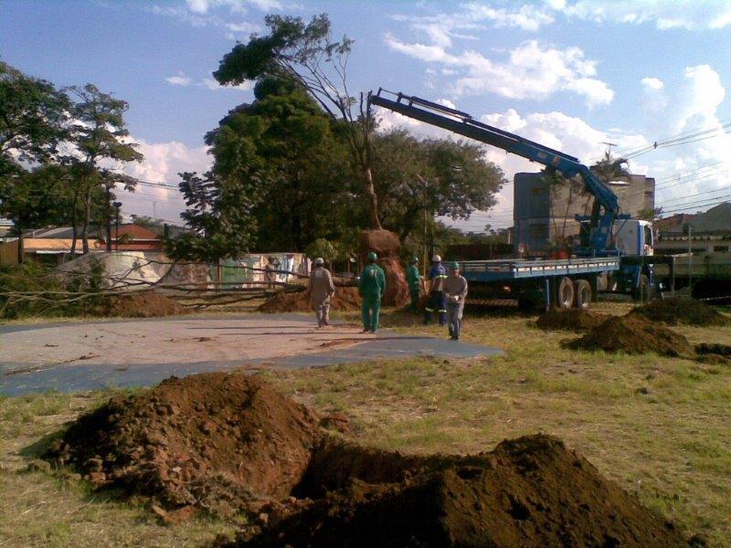 Empresa especializada em transplante de árvores