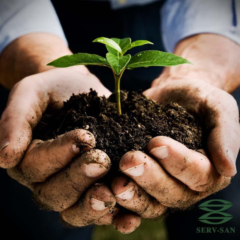 Empresa que faz reflorestamento