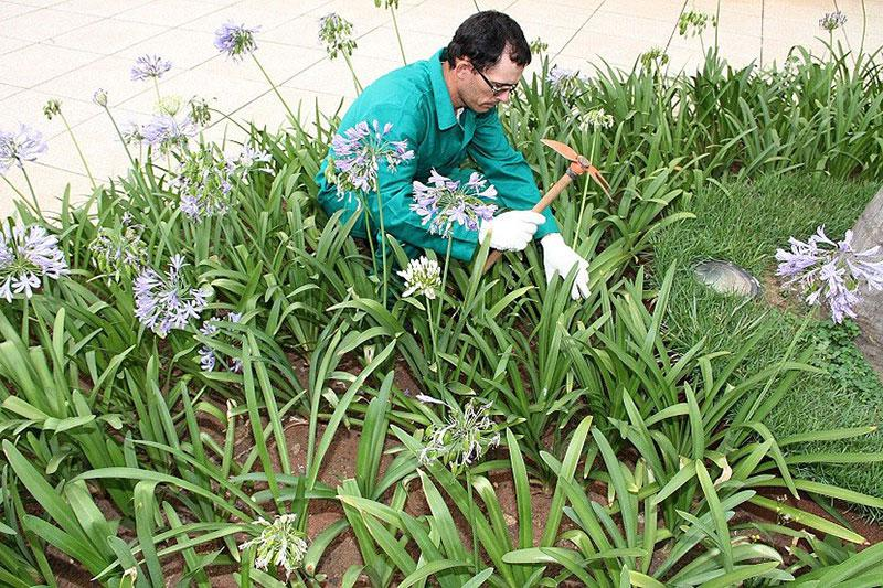 Empresas de manutenção de áreas verdes
