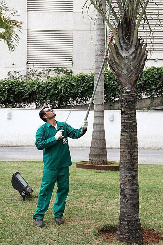 Empresas que fazem remoção de árvores