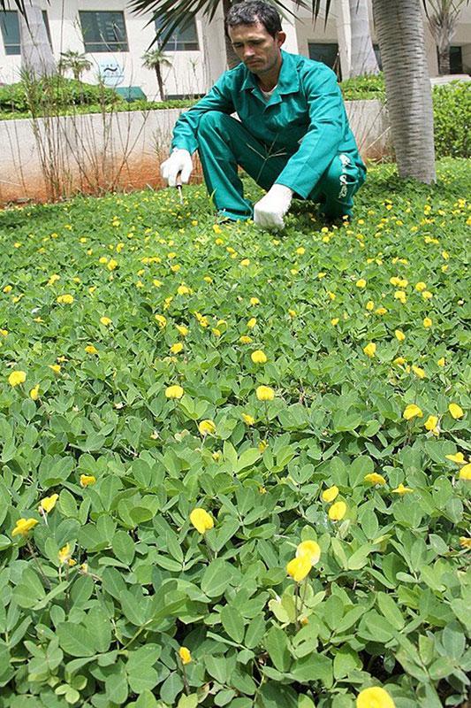 Serviços de manutenção de jardim