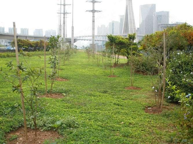 Reflorestamento e Compensação Ambiental