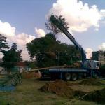 Empresa de poda de árvores