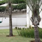 Empresas de poda de árvores sp