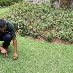 Reflorestamento e paisagismo