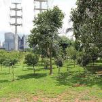 Empresa de remoção de árvores