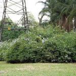 Empresas de transplante de árvores